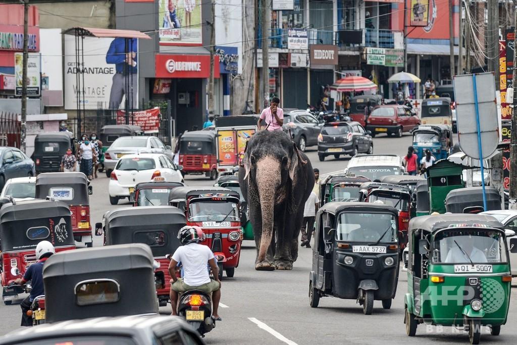 【今日の1枚】混雑は関係ない! 象さんのお通り