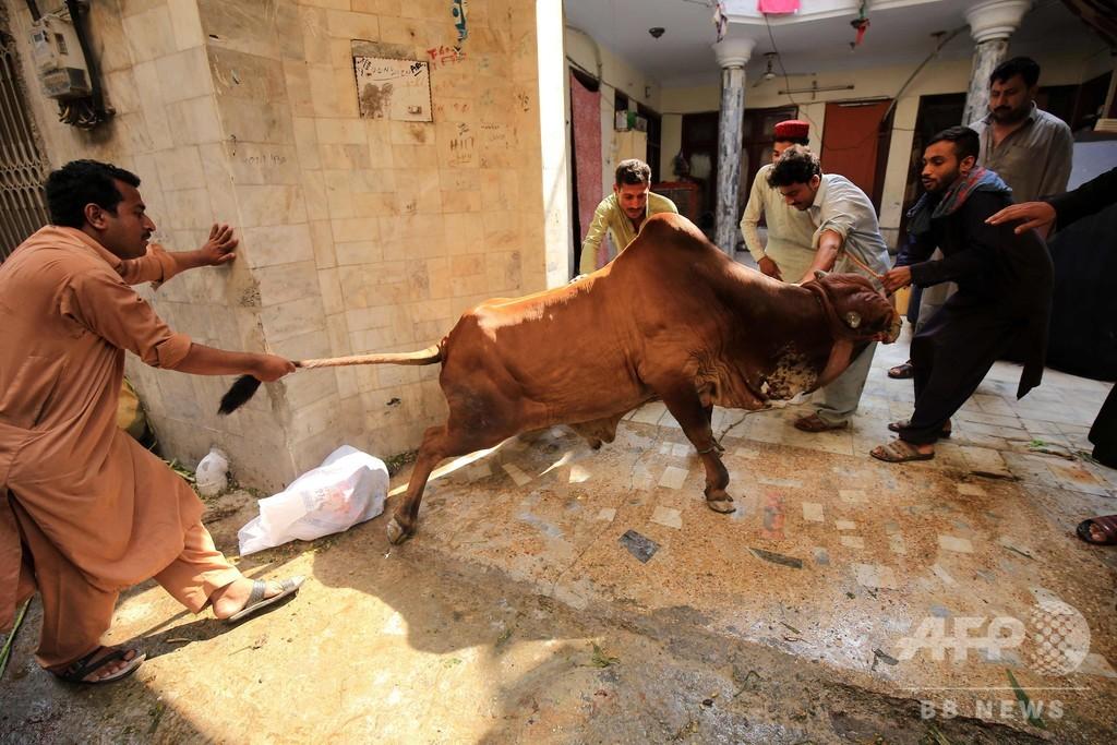 イスラム教の犠牲祭、いけにえにささげられる動物たち