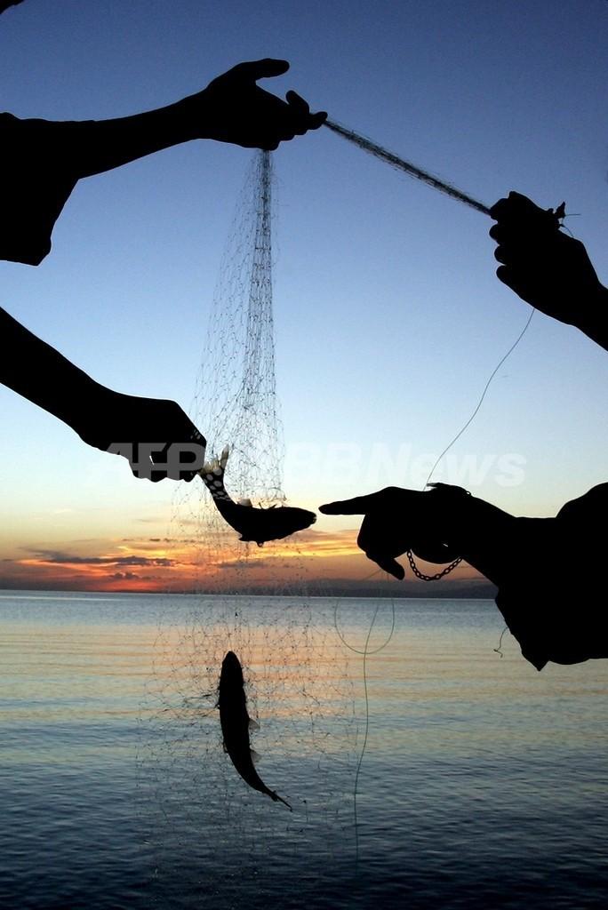 魚の平均体重がこの30年で半減、地球温暖化の影響か 仏研究