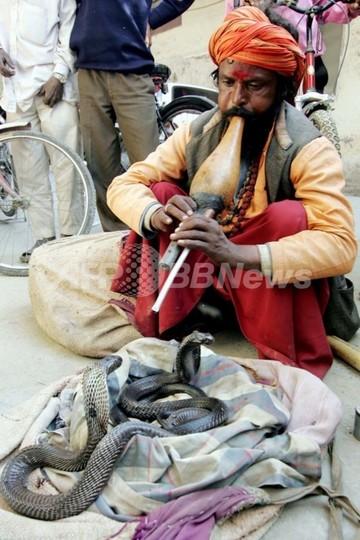 怒った男がヘビ放ち税務署が大パニック、インド