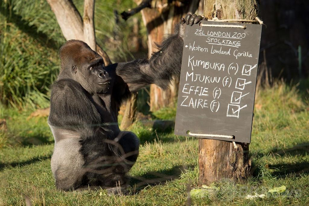 全部で何匹?1週間かけ850種を調査、ロンドン動物園