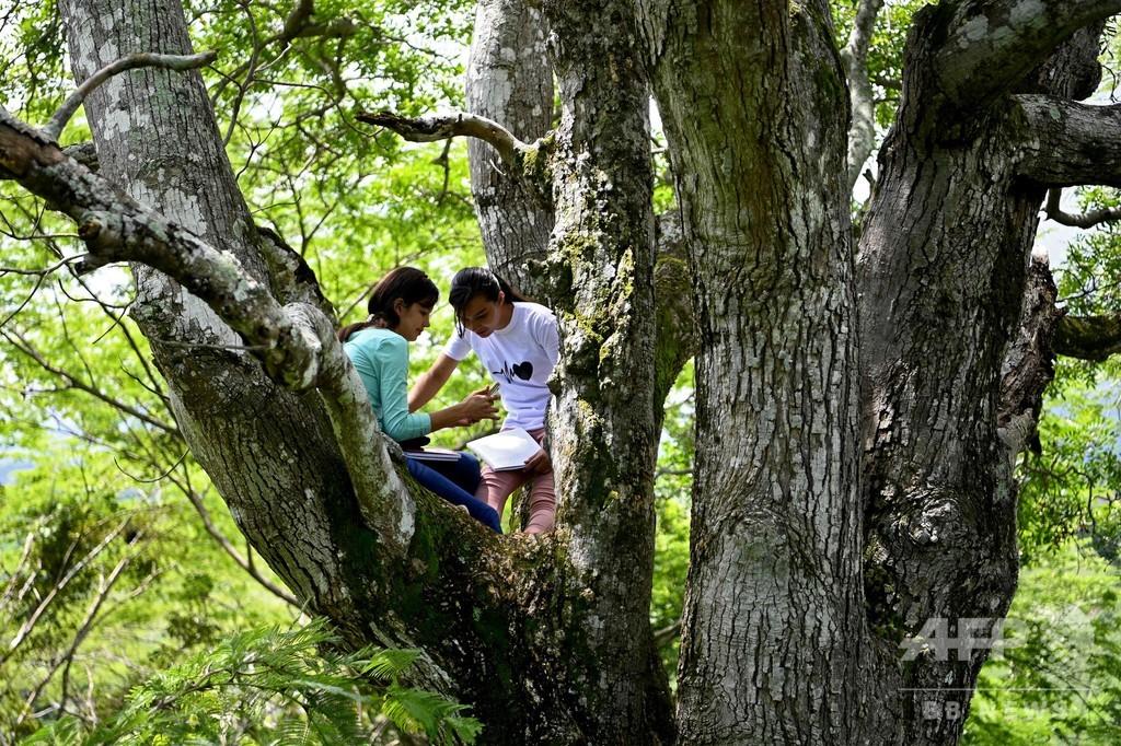 【今日の1枚】大学の授業、教室は木の上