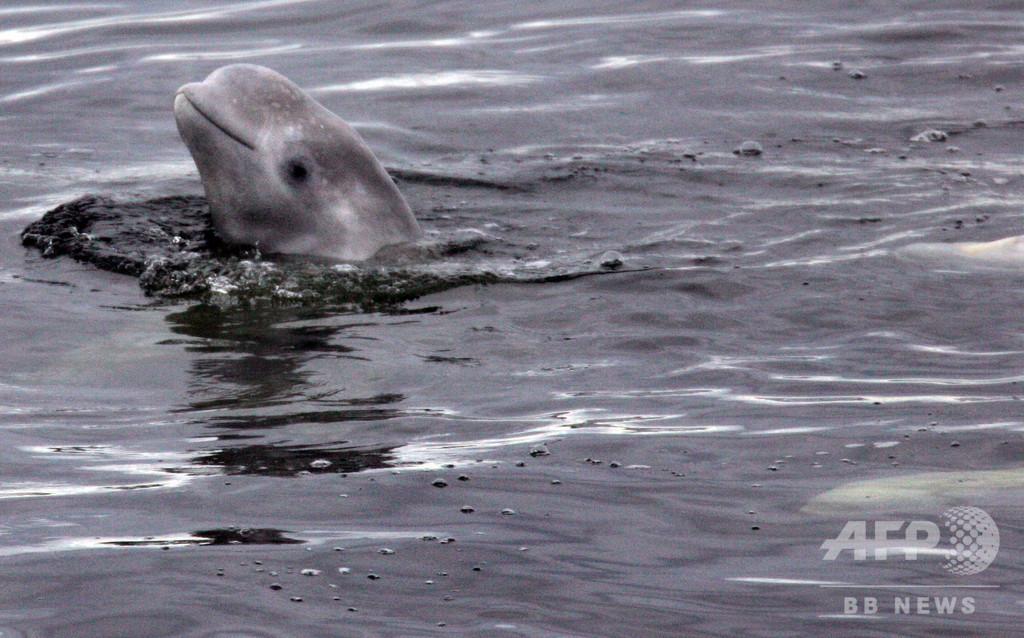 北極圏の動物、気候変動の影響で食性を転換 ノルウェー研究