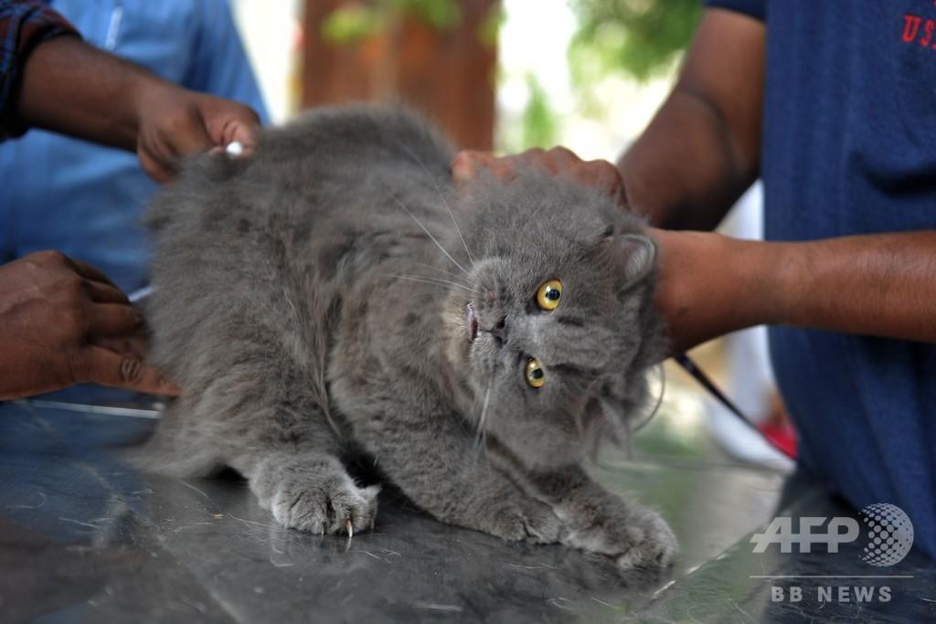 7月6日は動物由来感染症の啓発デー、インドで狂犬病の無料予防接種