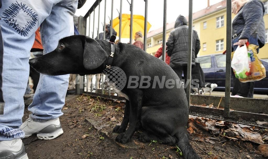 犬のふん対策にDNA検査!? ドイツの議員が提案
