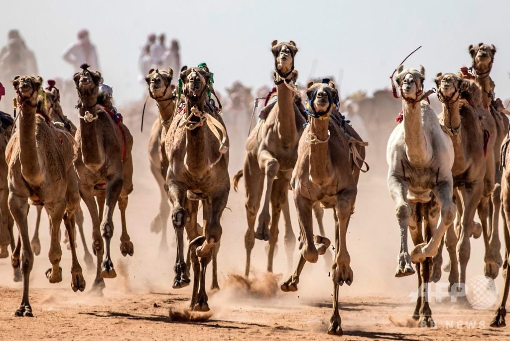 砂漠の伝統ラクダレース、コロナ影響で半年ぶりに開催 エジプト