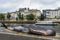 仏パリにクジラ打ち上げられた?