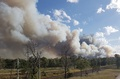 シドニー近郊の住宅地近くで森林火災、コアラを救出
