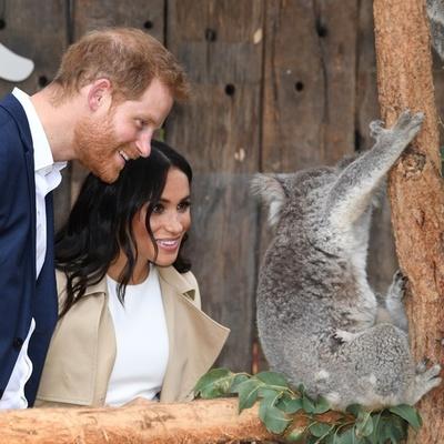 英ヘンリー王子とメーガン妃が豪訪問、懐妊発表から初めて公の場に
