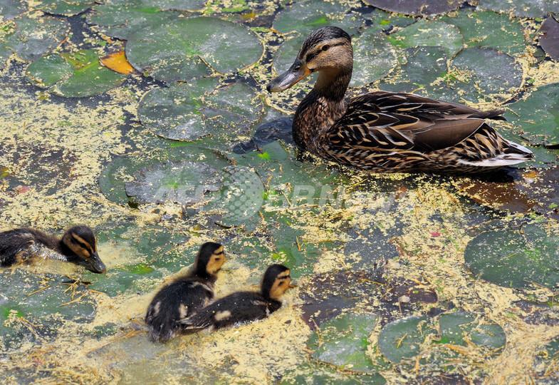 韓国の鳥インフルエンザ、首都ソウルにも感染拡大