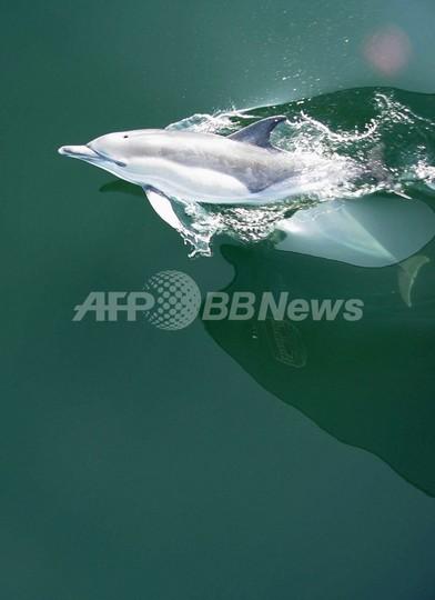 バルト海の酸欠海域が拡大、生態系崩壊の危機 WWF