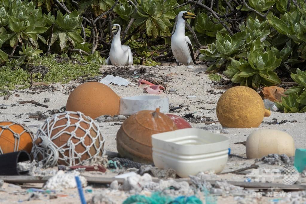 南太平洋の絶海の孤島がごみため化、科学者がプラごみ問題に警鐘