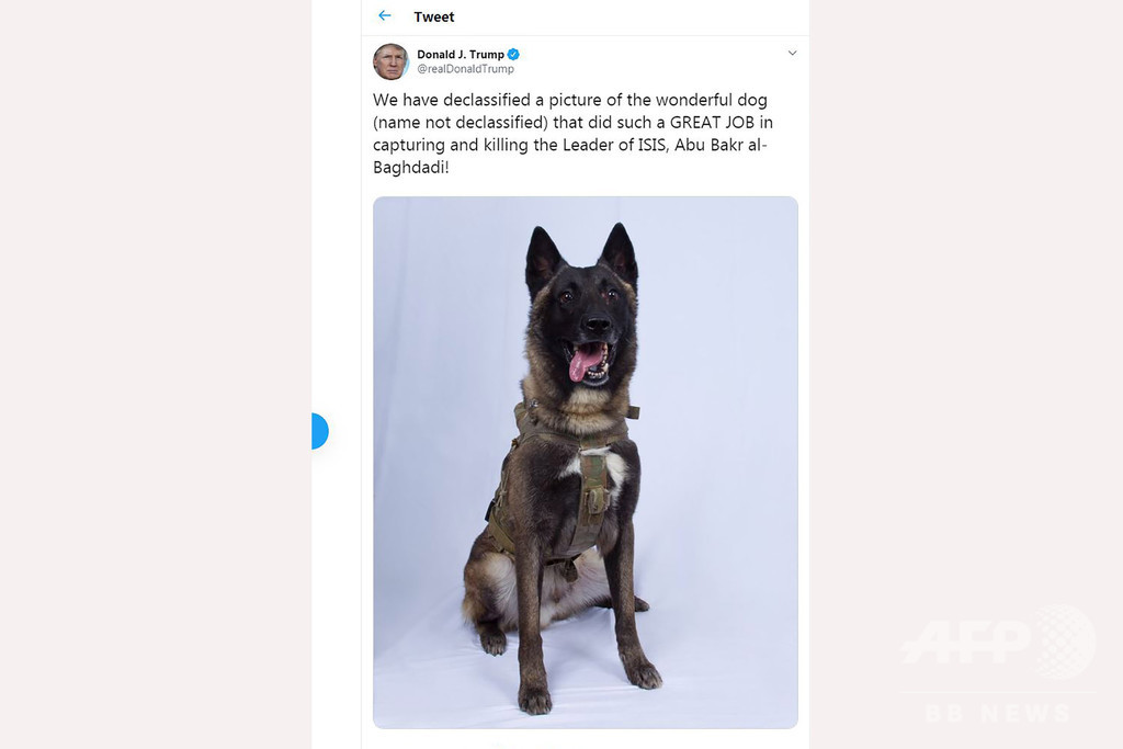 バグダディ容疑者掃討作戦で負傷の米軍用犬、任務に復帰