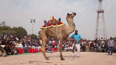 動画:色彩あふれるラクダ祭り、パレードや大会開催 インド