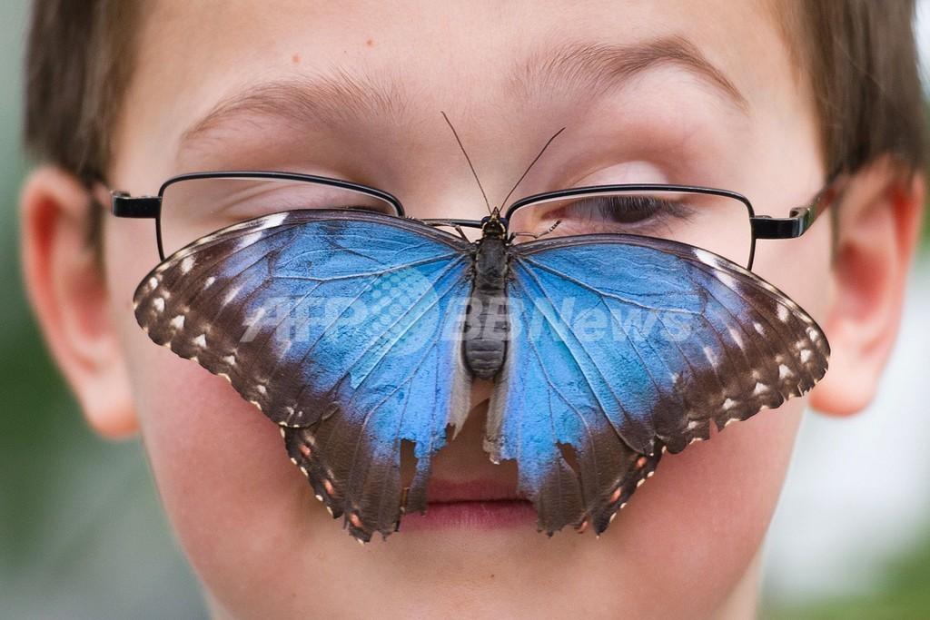 世界の蝶や蛾400種がロンドンに集結! 特別展、29日から