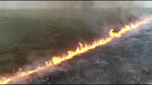 動画:平原をじわじわ進む炎、アマゾン森林火災がボリビア東部に拡大