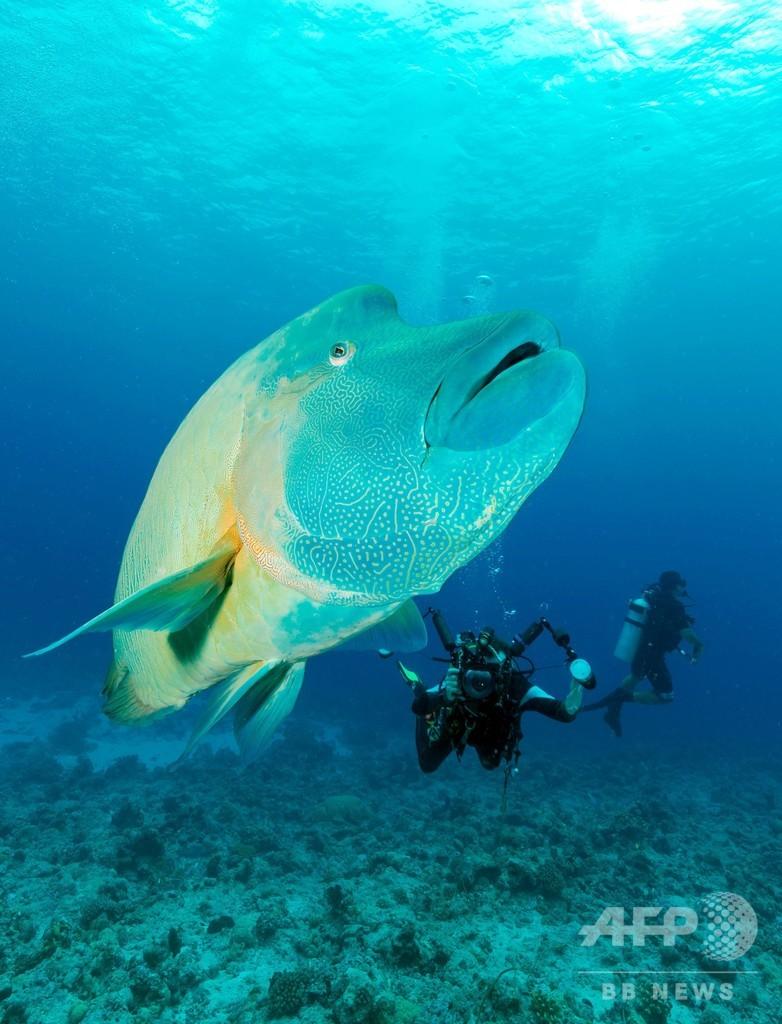 「サンゴ礁に有害」な日焼け止め禁止法を施行、パラオ