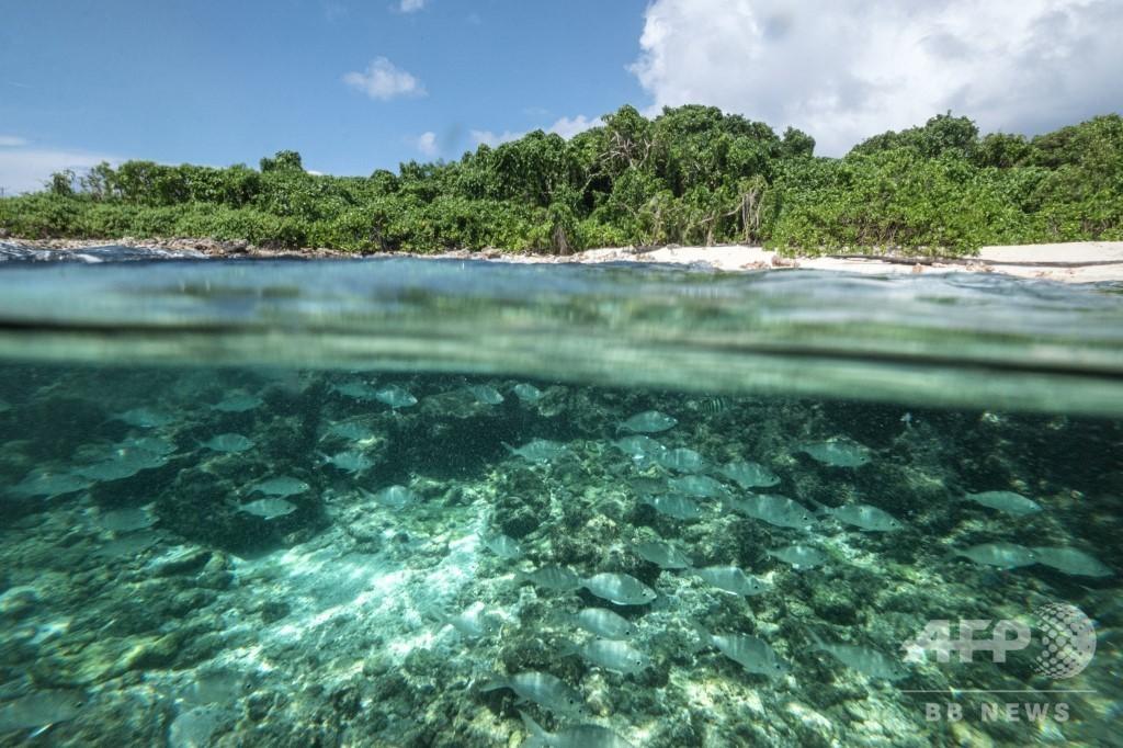 大規模観光より自然保護、西インド洋の島国セーシェル