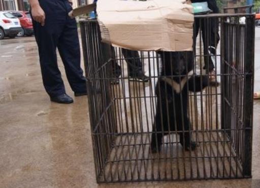 山で拾った子グマを2か月間育て 警察に引き渡す 雲南省