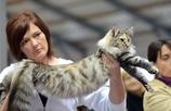 美しい猫ばかり、プラハで国際キャットショー