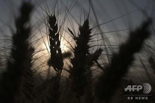 大気中CO2濃度の上昇、栄養不足の急増招く恐れ 研究