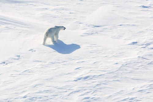 北極点で気温が急上昇、平均より20度高い零度以上に