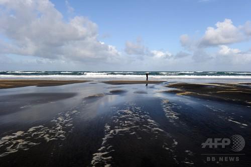 ニュージーランドの浜辺にクジラ200頭が座礁