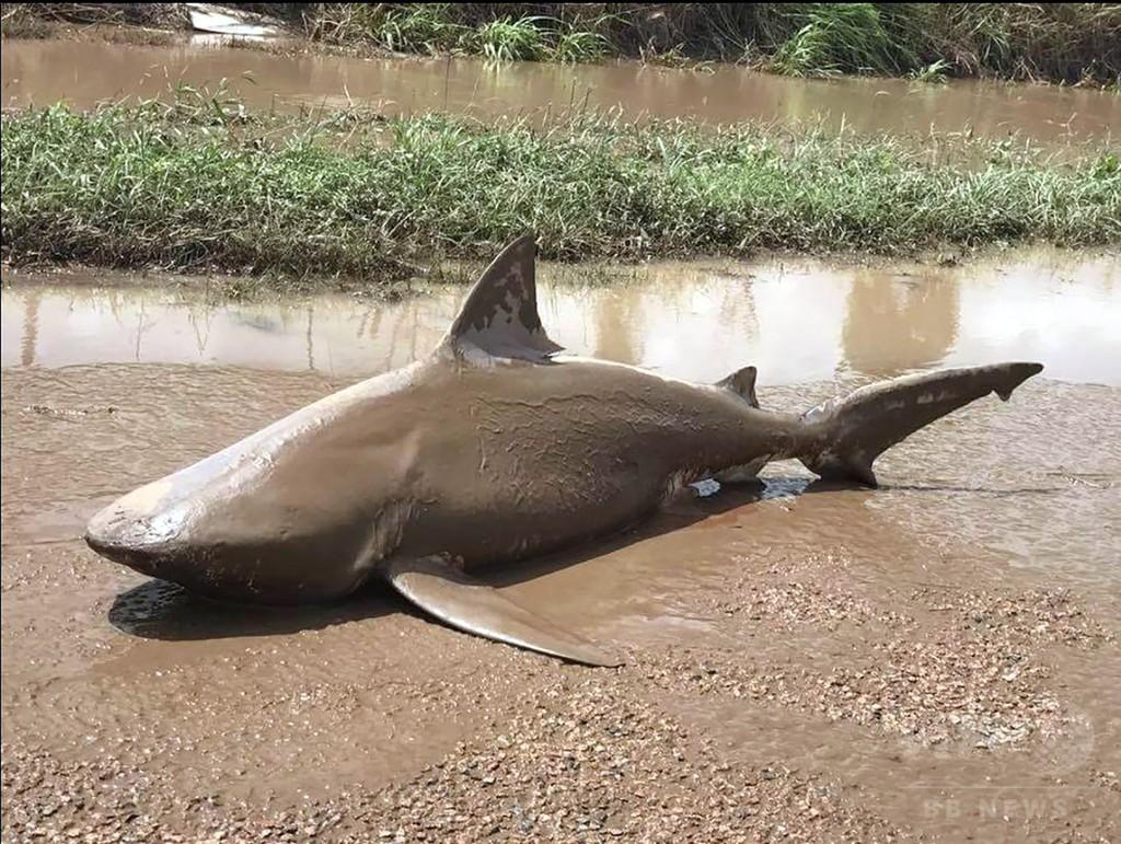 サメが路上に打ち上げられる、サイクロンに見舞われた豪北東部