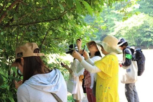 「東京の野草」でコスメ作り!美肌のための自然観察会開催