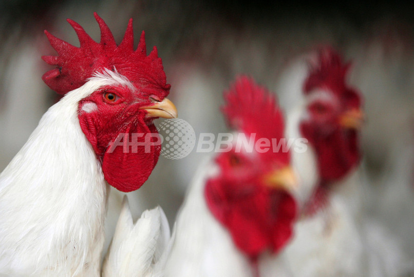 米国、鳥インフルエンザ対策に300億円追加支援