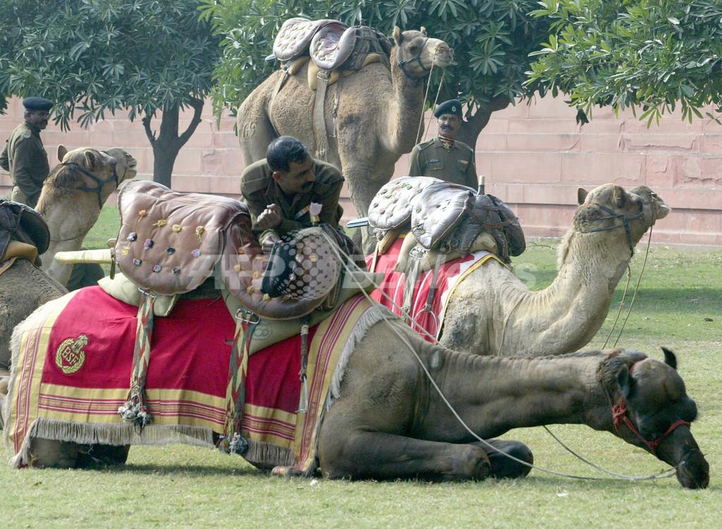 インド、ダルフールにラクダ部隊派遣へ