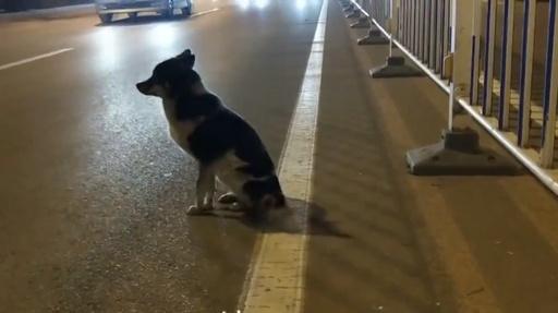 動画:事故死した主人の帰り待つ? 犬が現場の道路脇に80日間、内モンゴル