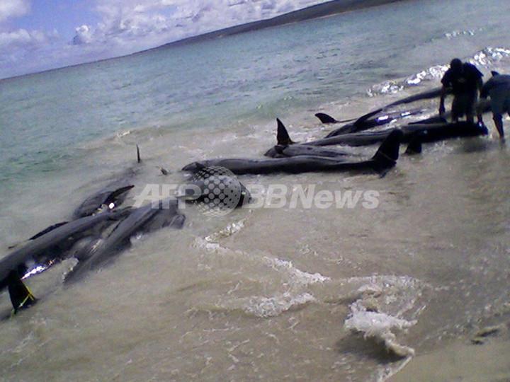 オーストラリアでクジラやイルカ80頭が浜辺に、救出作業続く