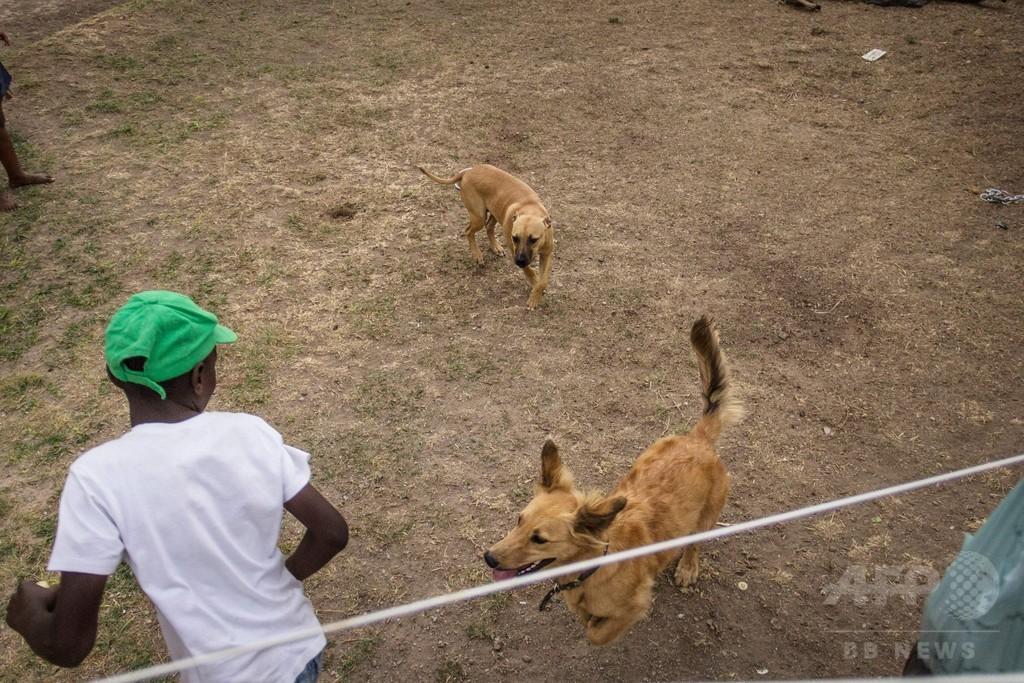 ギャングへの道を断ち若者を守る犬の訓練教室、南ア