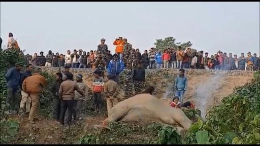 動画:妊娠中のゾウなど2頭、列車にはねられ死ぬ インド