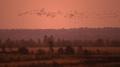 夕焼け空を飛ぶ渡り鳥、ドイツ