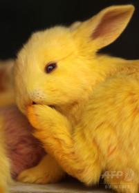 生放送で子ウサギ撲殺 デンマークのラジオ局「畜産業の残酷さ伝えるため」