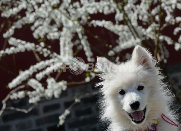 ペットの病気や死が3600例、中国産ジャーキーを調査 米国
