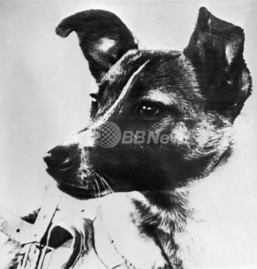 「ライカ犬」搭乗の人工衛星「スプートニク2号」打ち上げから50年