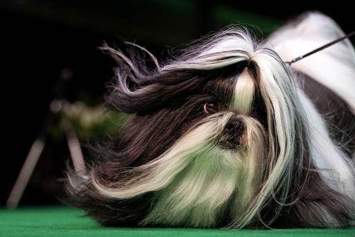 【今日の1枚】長毛が風になびいてキマってる