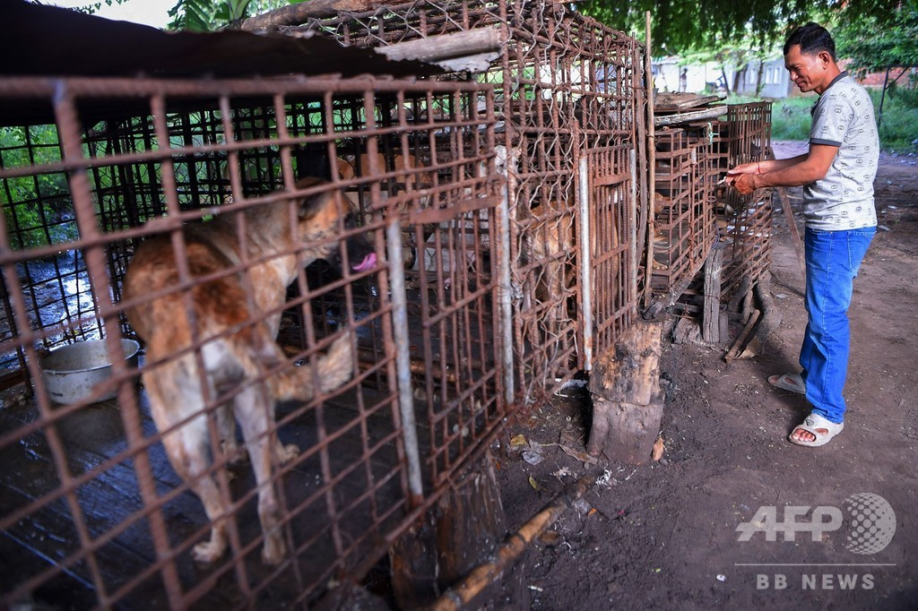 「これは罪だ」 カンボジアに広がる闇の犬肉産業