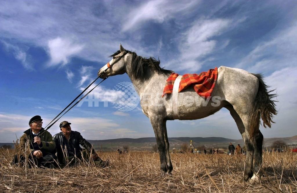 ウマの家畜化は5500年前、英研究