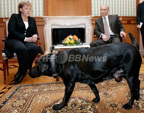 プーチン大統領、愛犬にロシア版GPS首輪の購入切望