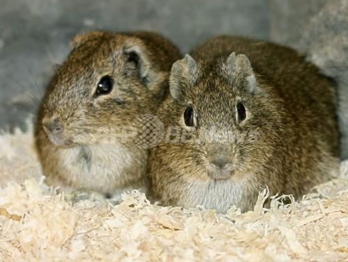 伊藤園、動物使用する実験廃止へ