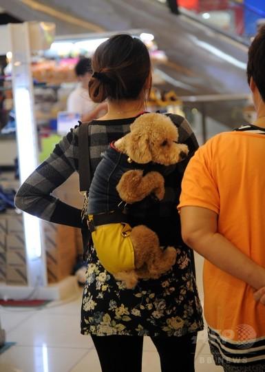 犬との触れ合いイベント、イスラム教指導者らは激怒 マレーシア