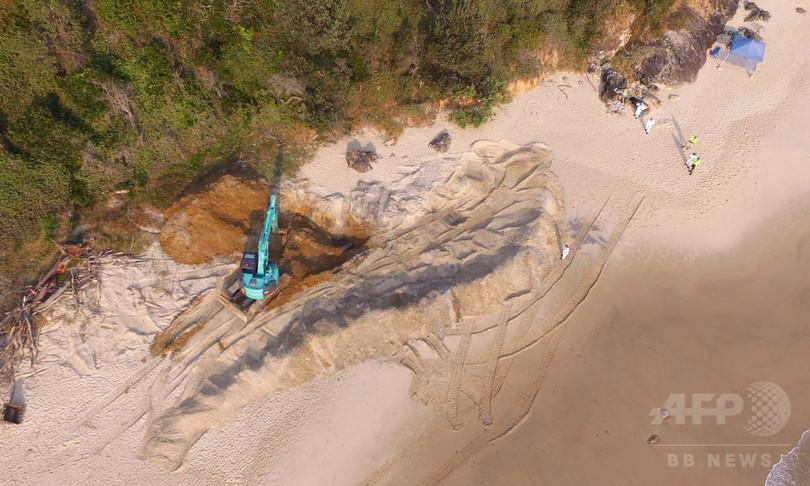 豪ビーチに埋めた巨大クジラ死骸、重機で掘り起こす サメ呼ぶと苦情