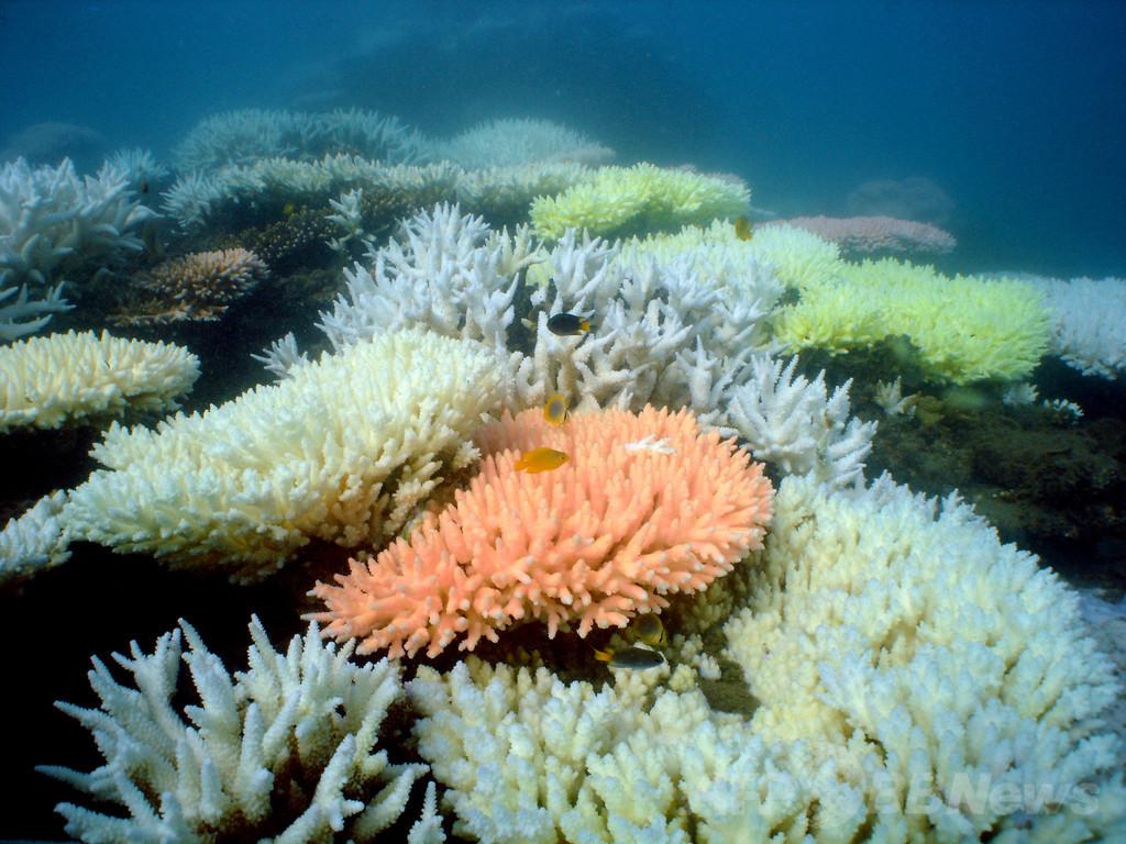 世界最大のサンゴ礁へしゅんせつ土砂の投棄許可 豪