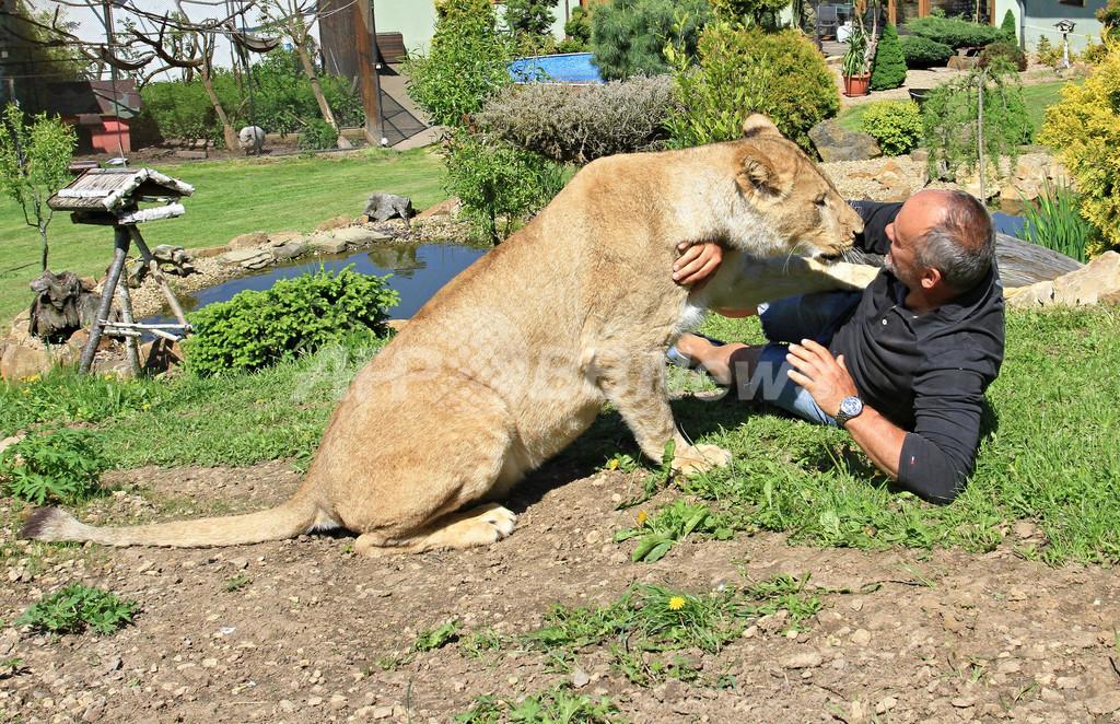庭でライオンと遊ぶ暮らし、チェコ