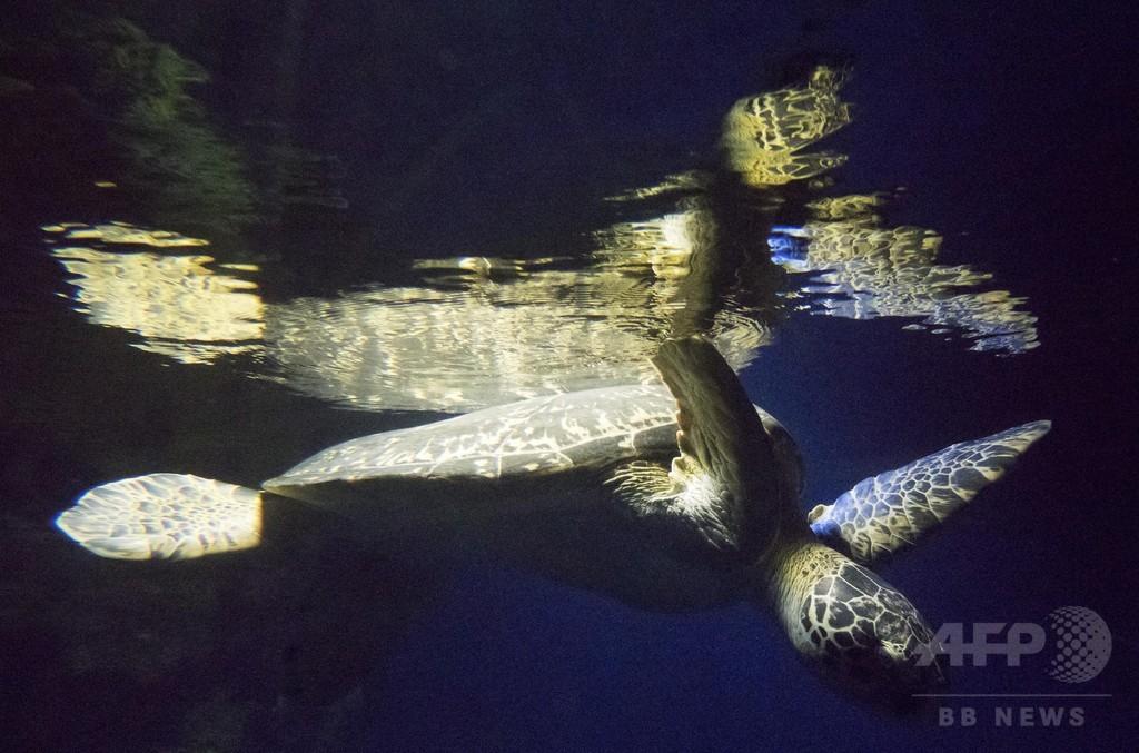ウミガメの肉で食中毒か、子ども8人死亡 マダガスカル