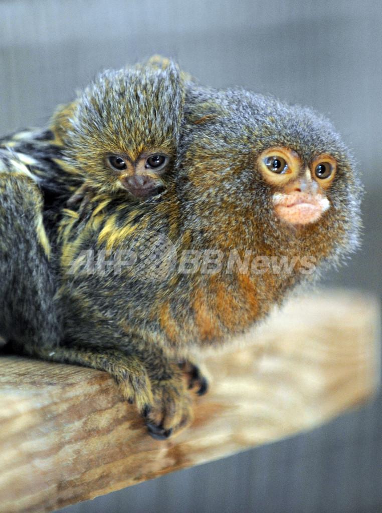 マーモセットやヒメコンドルの赤ちゃん、仏動物園